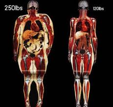 How the distribution of fat changes the body shape